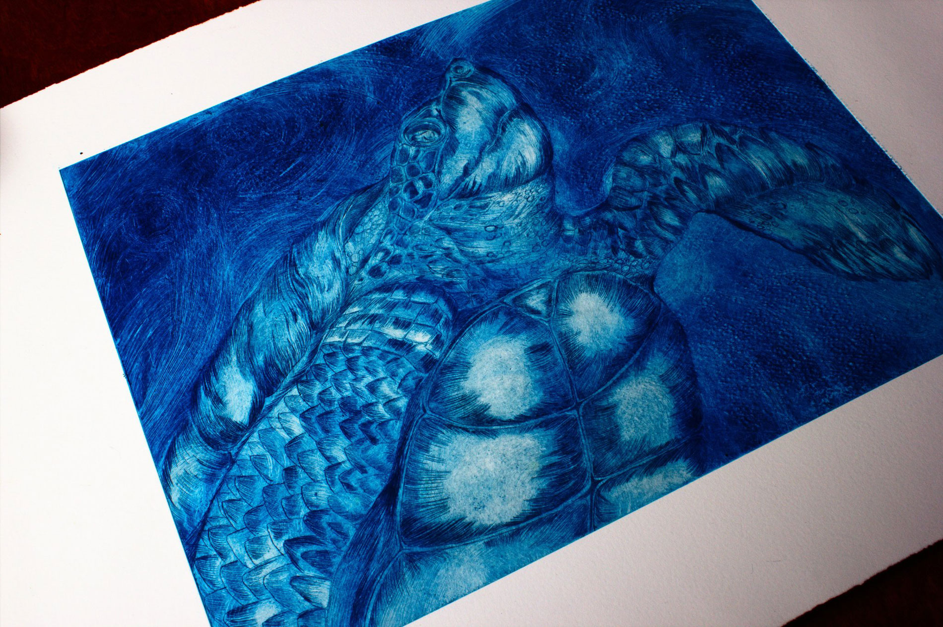 Blue turtle lithographic print