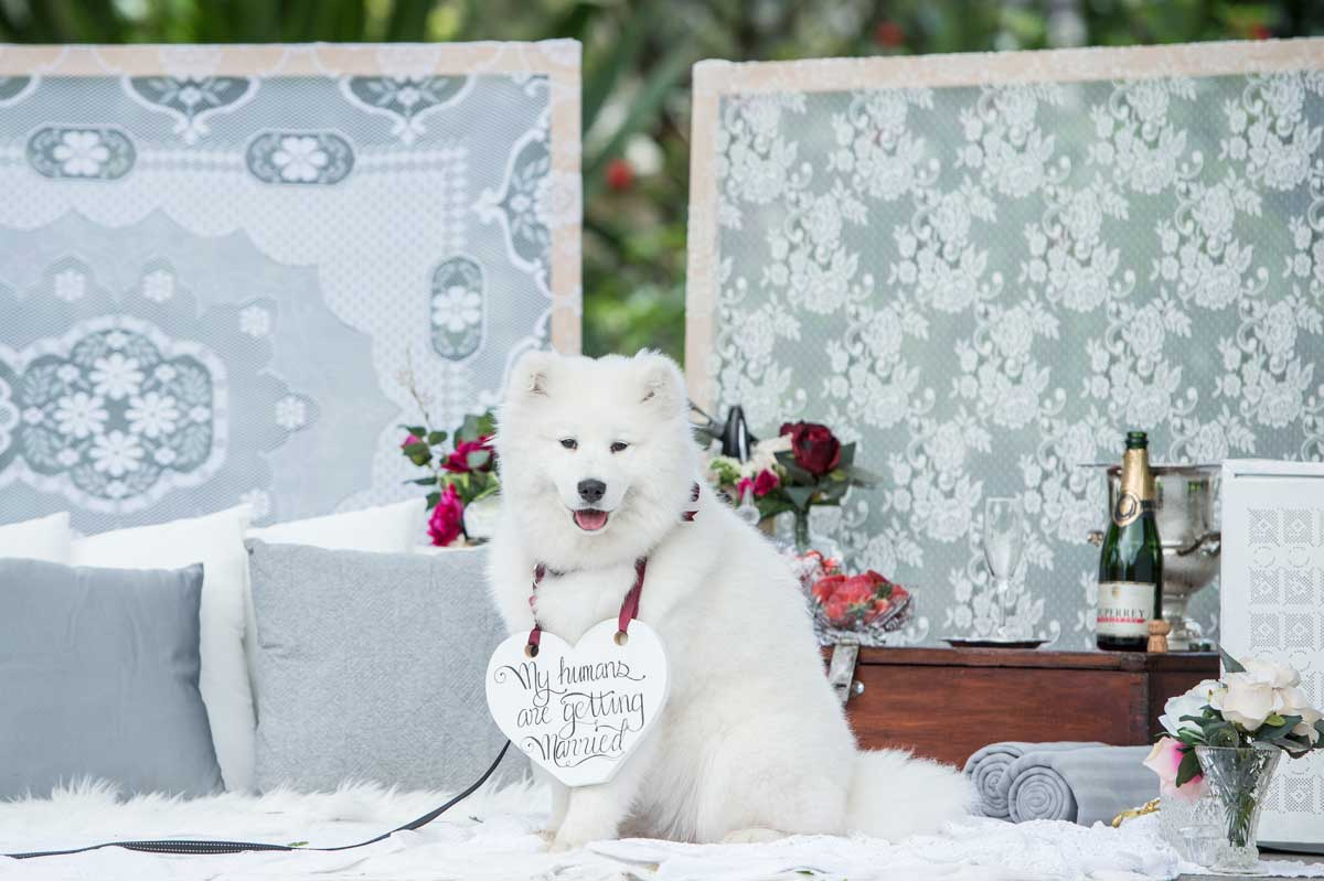 Proposal ideas for The Dog Lover. Image by Lush Images.